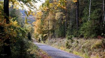 Осень свежестью дышала.. / Друзья,вспомним то золотое время осенней красивой поры..  Лес точно терем расписной  Лиловый,золотой,багряный  Весёлой пёстрою стеной  Стоит спокойно у дороги..