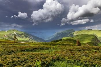 После дождя. / Черногория.