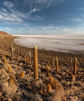 Остров кактусов / Остров кактусов посреди моря соли. Крупнеший солончак планеты. Салар де Уюни, Боливия