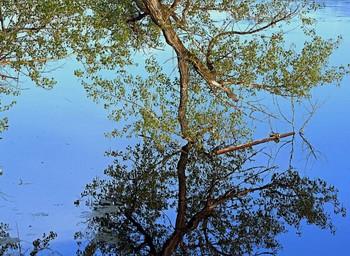 Отражение. / Весенняя вода касается веток.