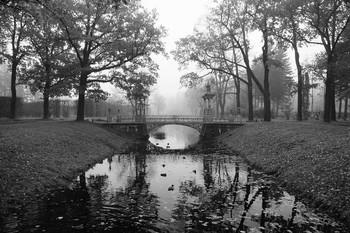 Туманное утро... / Александровский парк