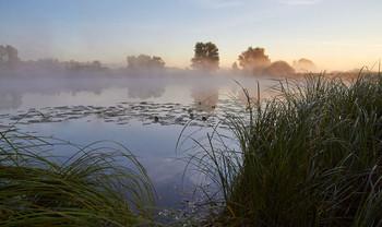 Без названия / рассвет,озеро,туман