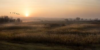 Подлёт / утро,рассвет,туман,птицы