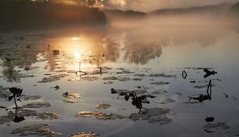 Без названия / озеро,рассвет,туман