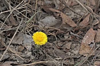 С теплом и первым цветочком всех! / Робко, но верно докатилась волна цветения и до нас.