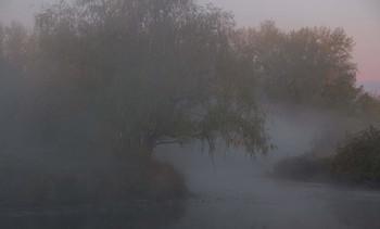 Без названия / туман,дерево,озеро
