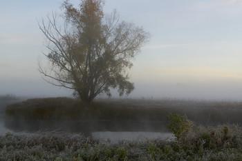 Без названия / туман,озеро,рассвет