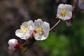 расцвет весны / Апрель.Цветение...
