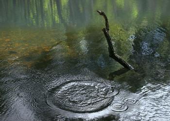 Весенний пруд... / ***