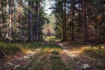 Лесной этюд / Пейзаж Беларуси