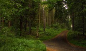 На перекрестке .. / Весенний лесной пейзаж .