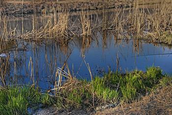 Зелененькая пошла... / На серой плоскости берега травка зеленая, наконец, появилась...