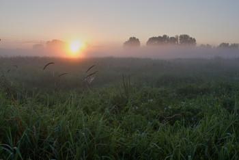 Рассвет. / рассвет,туман,зелень