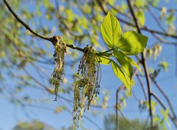 Весенняя солнечная путаница... / Вот и зазеленело у нас...