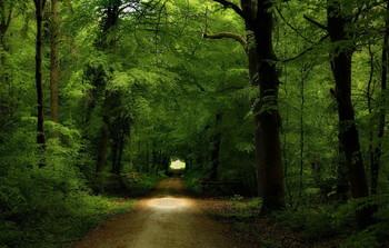Весенняя.. / Лесной весенний пейзаж.