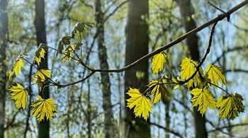 Май - время ярких листочков ... / Прозрачный май...