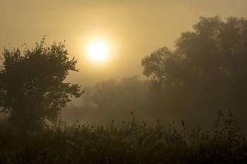 Туманный рассвет / утро