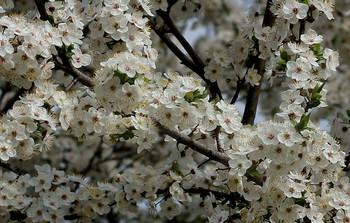 Весеннее... / Природа празднует начало жизни...