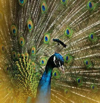 Взгляд сквозь решетку... / Вольер для птиц в Кусково...