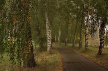 Вдоль русских берёз / Осенний пейзаж . Зарисовка .