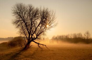 Туман / ....