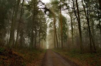 Январским вечером / Зимний лесной пейзаж.
