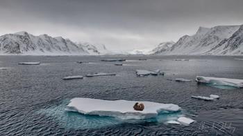 Мать и дитя / Арктика
