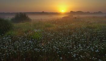 Утренний луг / летний рассвет, Беларусь, полесье