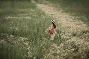 В ромашковом поле / девушка гуляет и собирает ромашки