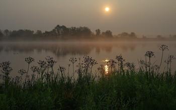 Утренний штиль / летнее утро у реки, Беларусь, полесье