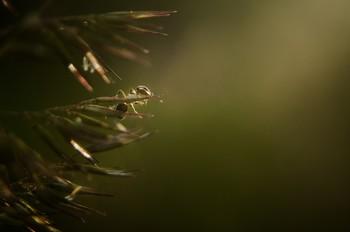 Муравей / Спонтанный портрет муравья