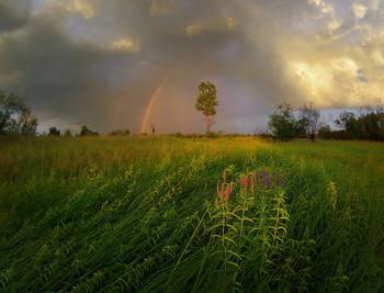 / летний вечер, полесье, Беларусь