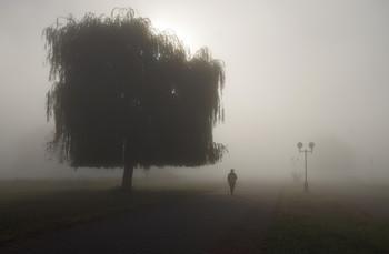 / в утреннем тумане