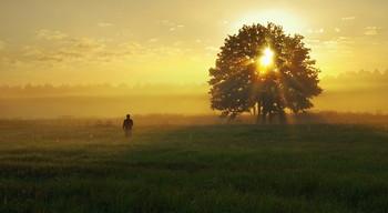 Утренний луг / лето, утро, Беларусь, полесье, пойменные луга