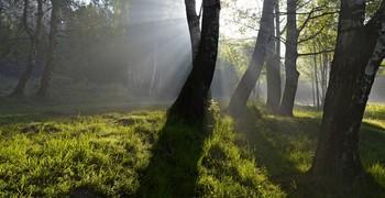 Утром туманным..... / Петербург. Шуваловский парк. Июнь