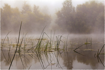 Туман на реке / Туманно утро на реке. Начало осени.