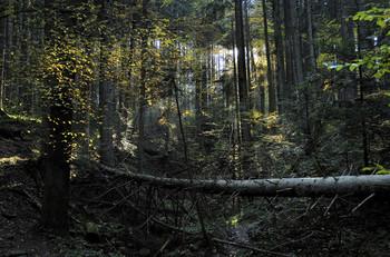 Темная не сторона / Темная сущность дремучего леса.