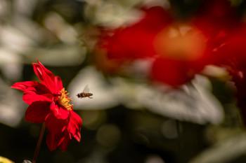 цветочное... / 07_09_2019