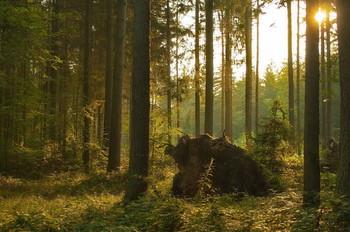 Встречая рассвет .. / Утренний лесной пейзаж . Зарисовка .