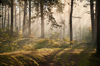Восеньская... / Восеньскi туман