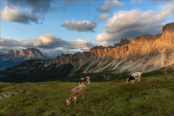Альпийские бурёнки / В окрестностях перевала Giau.