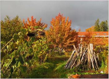 Сельская осень / Синичкин обед в моём саду.