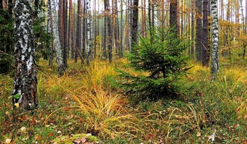В осеннем лесу / ***