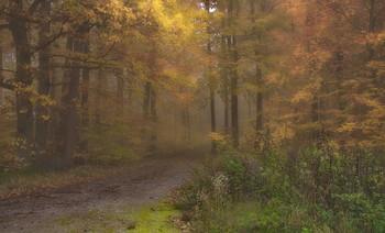 Осенние туманы .. / Туманным днем в лесу . Лесной осенний пейзаж.