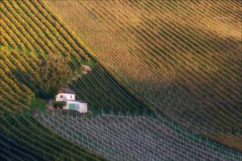 Pattern dei vigneti / Виноградники в местечке Sernau,Австрия.