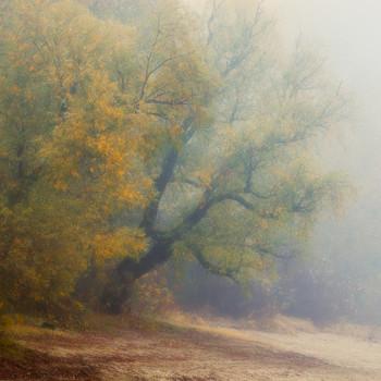 Осень в тумане / осень , туман , фрагмент