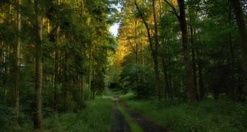 Здравствуй.... Утро! / Утренний лесной пейзаж .