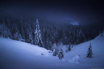 Спящий лес / Горганы. Карпаты. Украина
