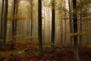 Вспоминая осень / Осенний лесной пейзаж.