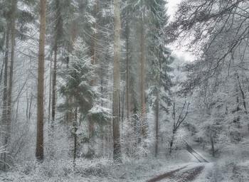 Потерялась зима.. / Из архива ...снега захотелось. . Лесной зимний пейзаж.
